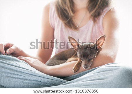 Friendship, trusting, devotion. Little toy-terrier dog sleeping on young owner's hand. Multicolored vibrant indoors filtered image #1310376850