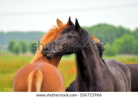 Friesian and friend hugging