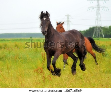 Friesian running with racehorse besides him