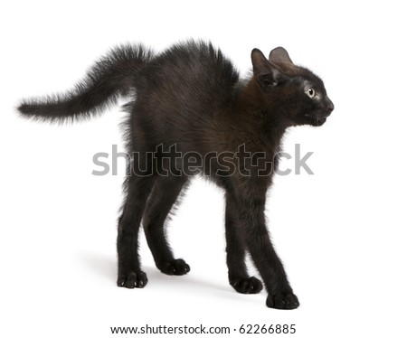 Frightened black kitten standing in front of white background - stock photo