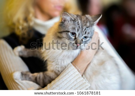 Frightened light fluffy cat in hands of girl volunteer, in shelter for homeless animals. Kitten will have a house, girl takes cat to her home #1061878181