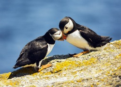 frisky puffin partners