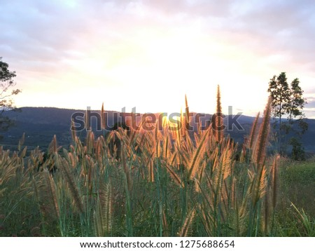Frist light in the countryside