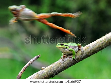 Frog, Arboreal frog