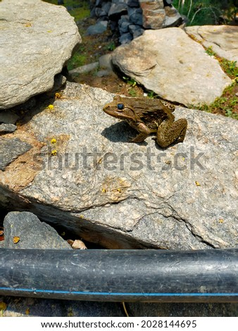 frog countable noun. A frog is a small creature with smooth skin, big eyes, and long back legs which it uses for jumping. Foto d'archivio ©