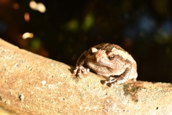 frog hanging on border of clay blister at garden