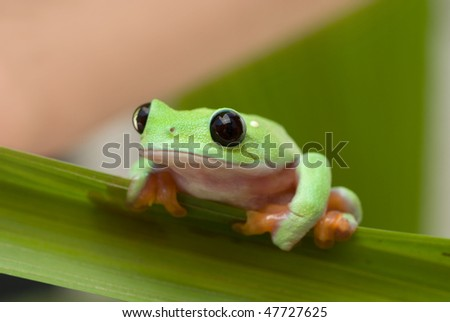 Frog holding on leaf 1