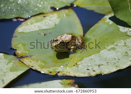 frog in pond #672860953