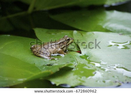 frog in pond #672860962