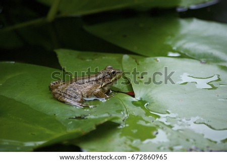 frog in pond #672860965
