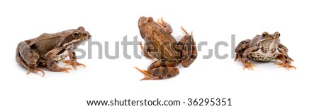 Frog isolated on a white background, collage