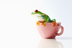 frog isolated on white background