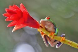 frog nature background, animal close up