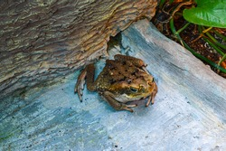 frog on a rock in the zoo