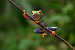 Frog on branch with nature background, animal closeup