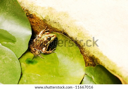 frog on leaves in water