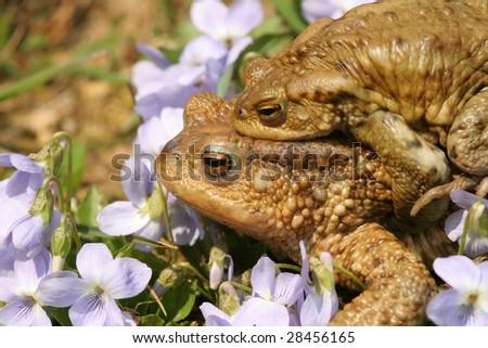 Frog pairing