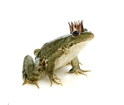 Frog Princess in a crown isolated on a white background.