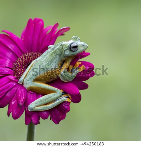 Frog Want To Jump - Shutterstock ID 494250163