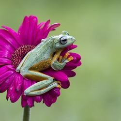 Frog Want To Jump - Amphibian Photo Series