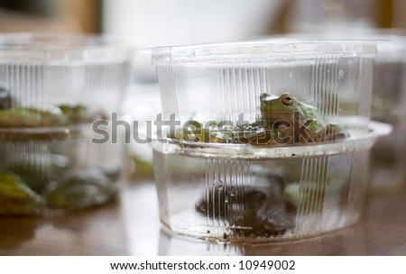 frogs in plastic containers for research study