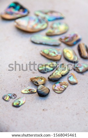 From above photo of shells, glass, stones, mother of pearl and Paua Shell in a circle - semi circle.  #1568045461