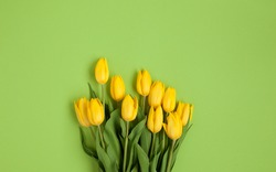 From above shot of fresh yellow tulips lying in bunch on green background.