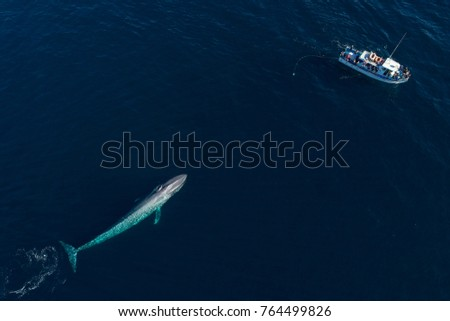 From an aerial view, a blue whale swims under the surface in Monterey Bay, California.