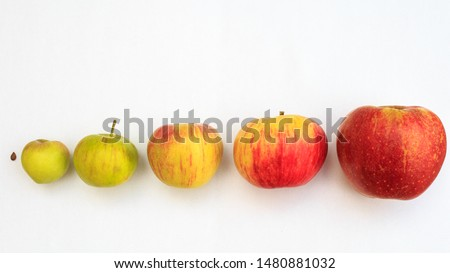 from idea to realization, Symbolism with ripening apples #1480881032
