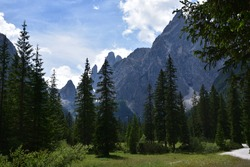 From the meadows and woods of the Fiscalina valley, a look at the rocks of Cima Uno and Undici