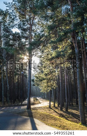 From the Reagan Park to the Baltic Sea near Sopot, Poland Zdjęcia stock ©