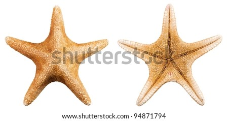 Front and back of a starfish over a white background