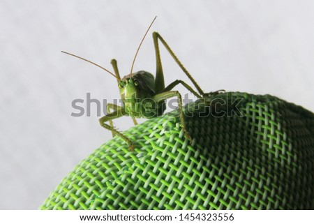 Front close up picture of a locust sitting on a green synthetic back of a garden chair