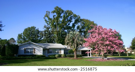 Front of a white ranch-style house with a Pink Tabebuia tree in full bloom, Orlando, Florida PHOTO ID: House00009a