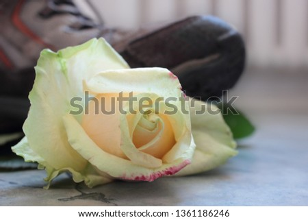 Front view of a bright yellow rosebud with green leaves under a brown heavy sneaker. The flower in the foreground and in focus. The foreground is blurred. The concept of fragility and defenselessness. #1361186246