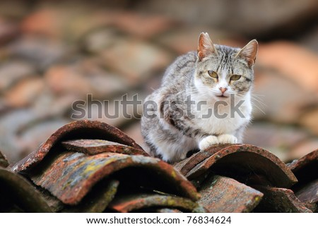 front view of cat on tile roof