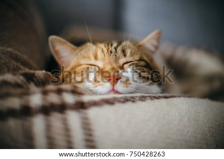 Front view of cute beautiful cat sleeping in her dreams on a classic British patterned quilt #750428263