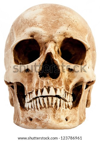 Front view of human skull - stock photo
