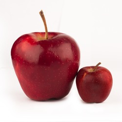 front view of large red apple next to a small one isolated on white background