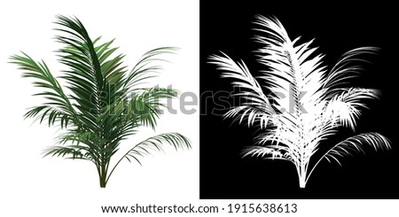Front view of Sabal Palm Tree. PNG with alpha channel to cutout. Made from 3D model for compositing.