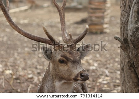 front view of spotted deer #791314114