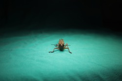 Front view of the grasshopper. grasshopper isolated on a green background. entomology, agricultural pest. insects camouflage. beautiful bug. animal in the studio. bugs, animals. wild nature, wildlife