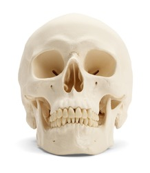 Front view of the human skull isolated on white background.