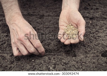 Frontal landscape view of human hands, one with the seeds, other planting spinach seeds into the ground.