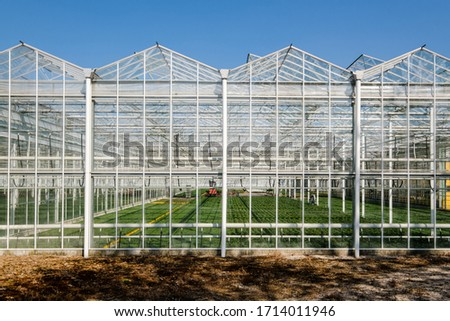 Frontal view inside of a modern industrial greenhouse for flowers and plants in the Westland, the Netherlands. Westland is a region in of the Netherlands. ストックフォト ©