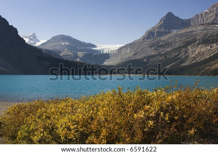 Fronted by yellow leaved shrubs and backed by mountains and a glacier, Bow Lake on the Icefields Parkway in Alberta, sparkles brilliant blue. - stock photo