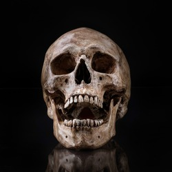 frontview of human skull open mouth reflect on isolated black background