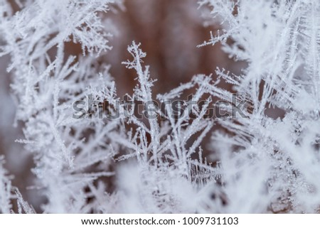 frost close-up, macro, ice crystals #1009731103