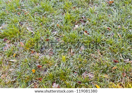 Frost covered grass and leaves