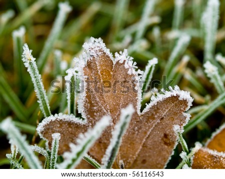 Frost Covered Leaves on a Grassy Background